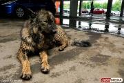 С начала года в Екатеринбурге отловили более 2000 бродячих собак