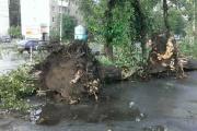 Езда с преградами. Дороги и тротуары Екатеринбурга завалило деревьями. ФОТО