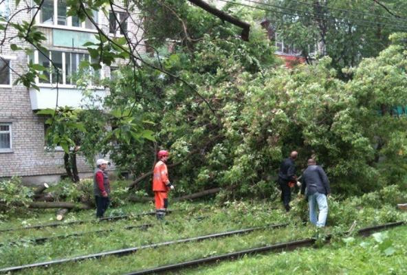 В Екатеринбурге упавшее дерево остановило  движение трамваев на ВИЗе