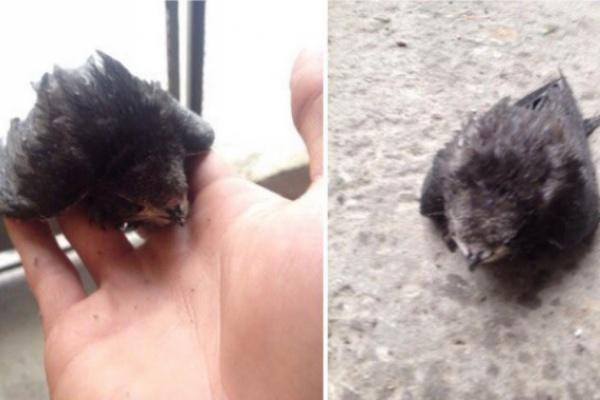 «Подобрал, чтобы кошки не съели». Екатеринбуржец спас раненого стрижа