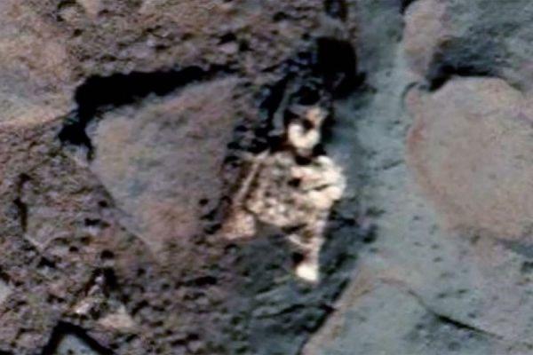 В интернете опубликованы снимки погибшего на Марсе существа