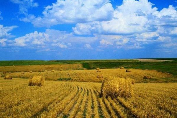 Вадим Потомский ввёл понижающие коэффициенты арендной платы за землю для сельхозпроизводителей