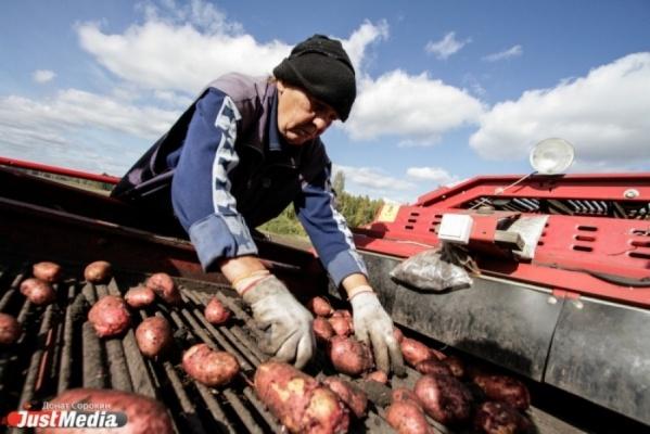 Свердловские фермеры и малые торговые сети решили объединиться, чтобы выжить в кризис