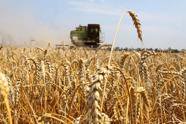 Федеральная поддержка Орловской области на агрострахование увеличена на 168 млн рублей