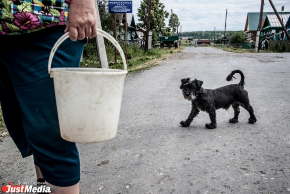 В Первоуральске один из живодеров, съевших соседскую собаку, попал под амнистию