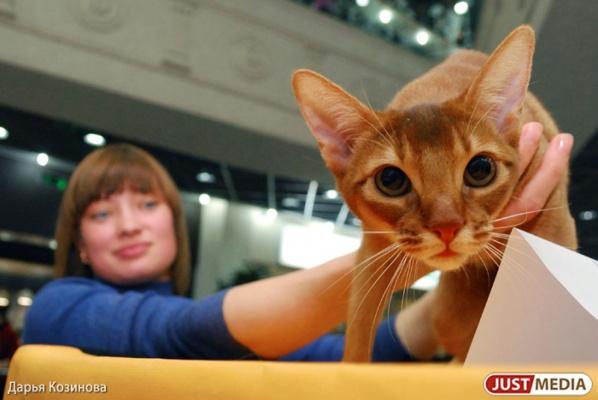 В День города перед екатеринбуржцами предстанут самые низкие и высокие кошки мира