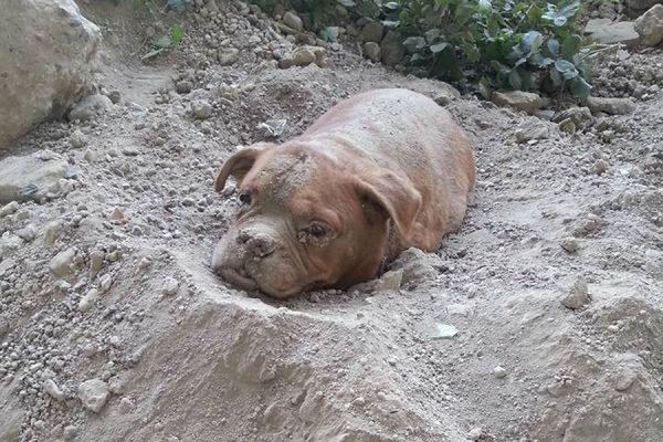 В маленьком городке под Парижем мужчина спас похороненную заживо собаку
