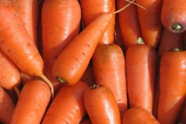 В Свердловской области ожидается крайне низкий урожай моркови