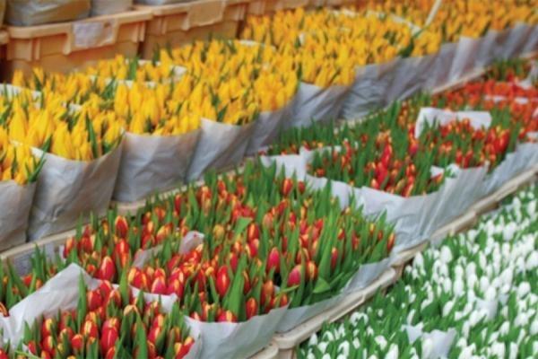 """В отношении импорта цветов из ЕС Россельхознадзор не исключает """"крайних мер»"""