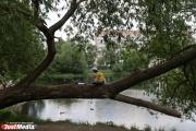 Мэрия предложила екатеринбуржцам выбрать деревья для нового парка у Дворца молодежи