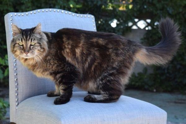 Кот Вельвет из Орегона, живущий больше 26 лет, признан самым старым в мире