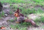 Свердловские ветеринары: «Если белка пришла на дискотеку, то, возможно, у нее бешенство»