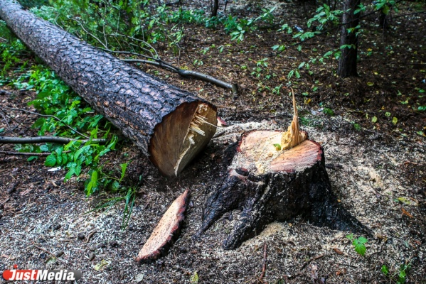 Деревообрабатывающее предприятие Белоярского района оштрафовали на триста тысяч рублей за отсутствие площадки для опасных отходов