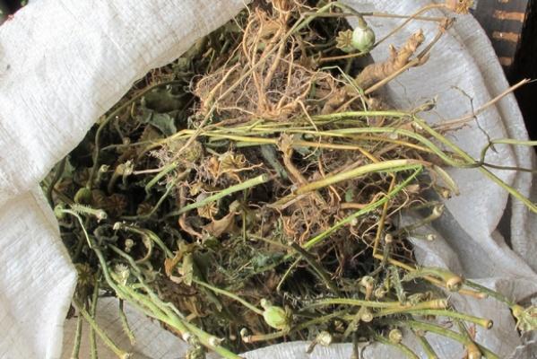 У жителя Североуральска изъяли 1,3 килограмма маковой соломы
