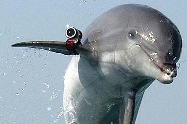 В ХАМАС заявили о поимке израильского дельфина-шпиона