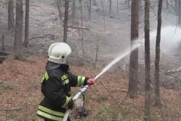 В Бурятии при тушении лесного пожара погиб работник «Забайкальской авиабазы охраны лесов»