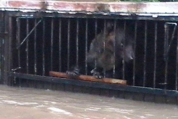 В Уссурийске в затопленном зоопарке остаются 14 крупных животных, в том числе - лев
