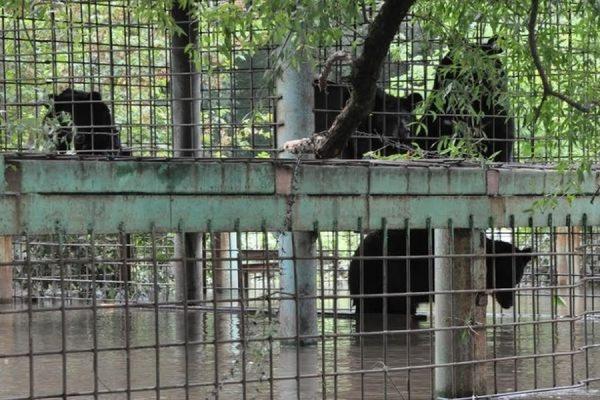 Эвакуировать зверей из затопленного зоопарка в Уссурийске будут всю ночь