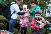Молодые мамы Екатеринбурга поделились с властями города идеями благоустройства нового парка