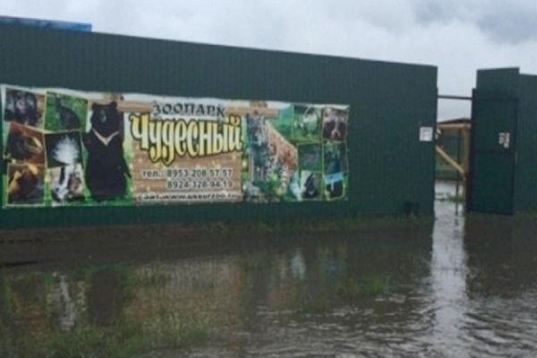 Из подтопленного зоопарка в Уссурийске эвакуировали пять хищников