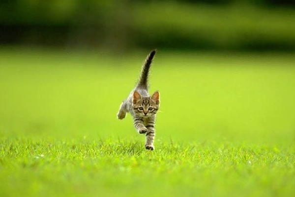 Британские ученые выяснили, почему кошки не привязываются к хозяевам