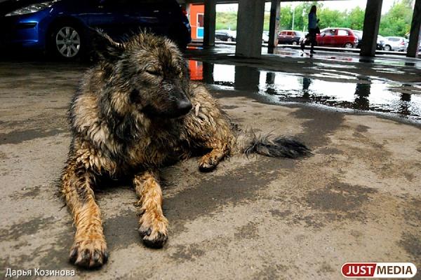 Жители Екатеринбурга снимут социальный ролик о бездомных животных