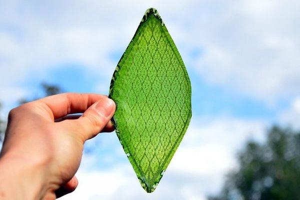 По данным ученых искусственный фотосинтез в будущем поможет отказаться от нефти и газа