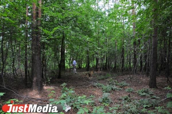 В Калиновском парке вандалы разрушили дистанцию осеннего трейла