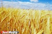 Свердловские аграрии испытывают новые комбайны