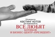 В Екатеринбурге около десятка котов станут участниками реалити-шоу