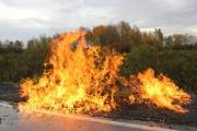 Вблизи Кольцовского тракта уничтожили поле конопли в человеческий рост