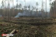 В Екатеринбурге в Калиновском парке неизвестные рубят и жгут деревья