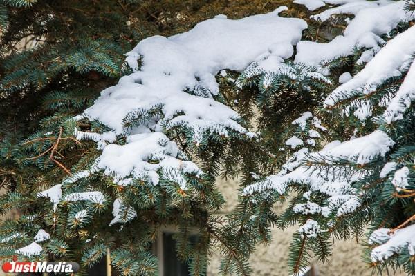 В выходные екатеринбуржцев ждет мокрый снег. Днем — плюс три