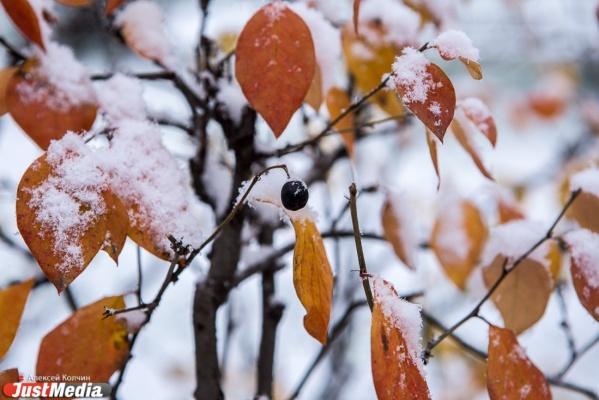 В Екатеринбурге до середины недели будет «минус», а потом снова потеплеет