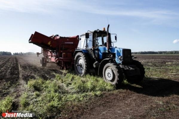 Свердловские фермеры приспосабливают коровники под хранение картошки