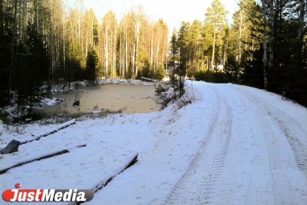 Свердловская прокуратура поймала Департамент лесного хозяйства на серьезных нарушениях федерального законодательства