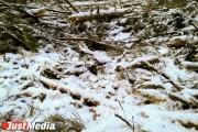 В Ревде будут судить экс-лесничего и бизнесмена, вырубивших деревьев на 9,5 миллиона рублей