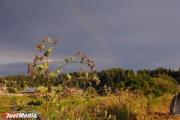 В Свердловской области больше всего выявляется нарушений в сфере земельного законодательства