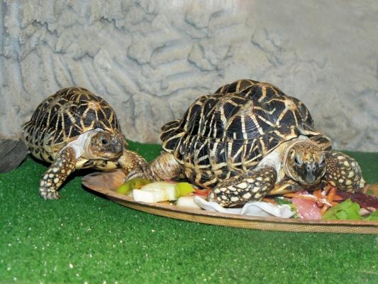В Екатеринбургском зоопарке змеи, черепахи и ящерицы готовятся к спячке
