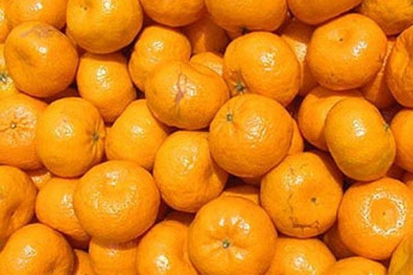 Россельхознадзор вернул Анкаре 50 тонн мандаринов