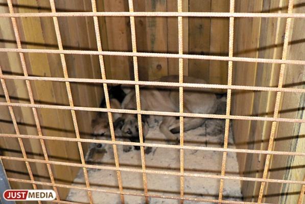 В Екатеринбурге бездомному псу прострелили морду. ФОТО 18+