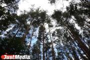 В Белоярском районе лесной участок незаконно передали частной компании