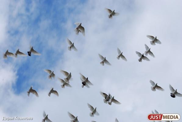 Голодные птицы привели екатеринбургскую компанию к крупному штрафу