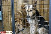 За прошлый год в Екатеринбурге отловили 4277 бродячих собак