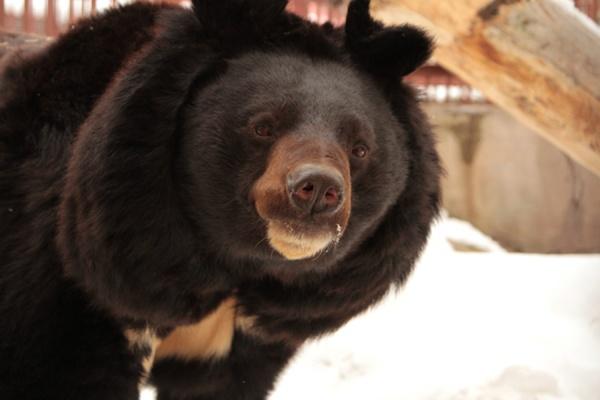 Весна пришла! В Екатеринбургском зоопарке проснулись медведи