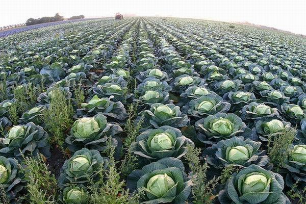 Российские фермеры получат 3,9 млрд рублей из федерального бюджета