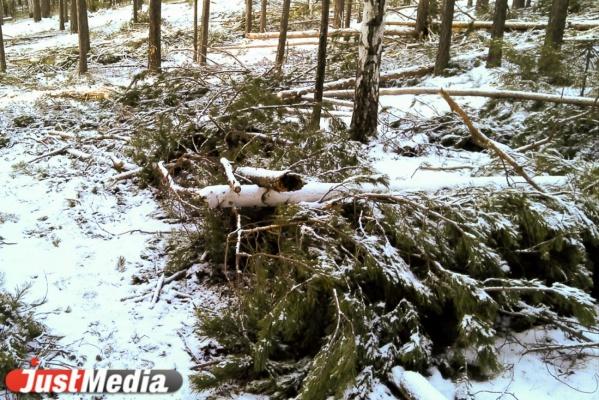 Возбуждено уголовное дело по факту незаконной вырубки деревьев в парке на улице 8 Марта