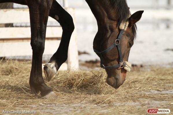 Грузовик сбил двух лошадей на Режевском тракте