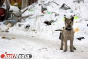 В приемнике «Спецавтобазы» ждут новых хозяев пятьдесят бездомных собак