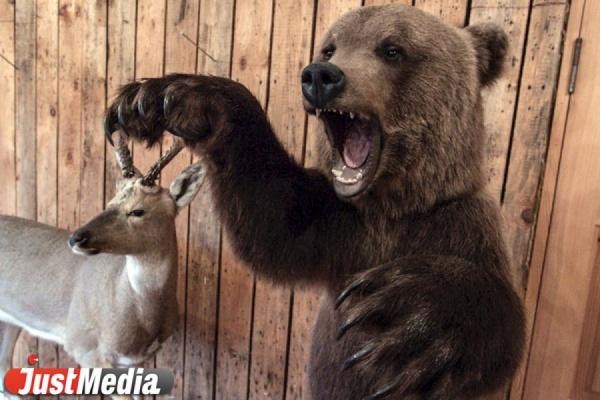 На Среднем Урале начали развивать охотничий туризм